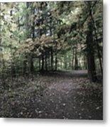 Trail Walking  Metal Print