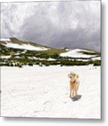 Traildog At Kingston Peak Snow Field Metal Print