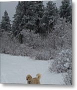 Traildog Loving The Winter Scene In The Flatirons Metal Print