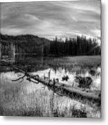 Tranquil Black And White 5 Metal Print