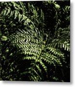 Tranquil Botanical Ferns Metal Print