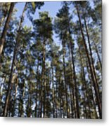Tranquil Forest Metal Print