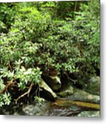 Tranquil Mountain Laurel Stream In The Great Smoky Mountains National Park Metal Print