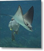 Tranquil Sea Creatures Metal Print