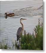 Tranquil Waterlife Metal Print by Cathy  Beharriell