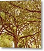 Tranquility Metal Print by Adele Moscaritolo