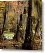 Tranquility In The Cyoress Forest Metal Print