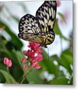 Translucent Butterfly Metal Print