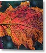 Translucent Red Oak Leaf Study Metal Print