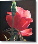 Translucent Rose Metal Print