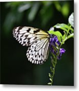 Translucent Wings On A Rice Paper Butterfly Metal Print