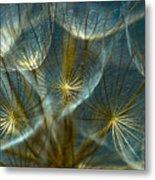 Translucid Dandelions Metal Print by Iris Greenwell