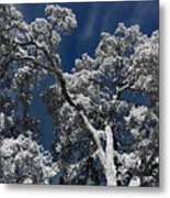 Trapped In Ice Metal Print
