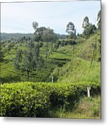 Travelling By Train From Colombo To Badulla Metal Print
