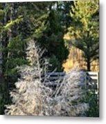 Travertine Tree Metal Print