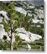 Treasure Lake Pine Metal Print