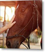 Treating From Depression With The Help Of A Horse Metal Print