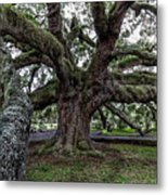 Treaty Oak 12 14 2015 027 Metal Print