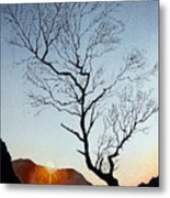Tree Above Crummock Water Metal Print