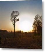 Tree Against The Sun II Metal Print