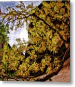 Tree Along Zion Riverside Walk Metal Print