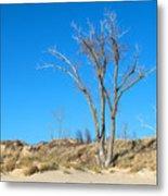 Tree And A Dune Metal Print