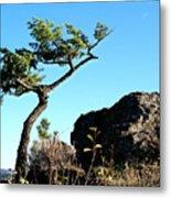 Tree And Rock Metal Print
