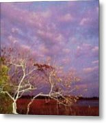 Tree And Sky At Cape May Point State Park  Nj Metal Print