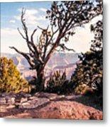 Tree At Moran Point Metal Print