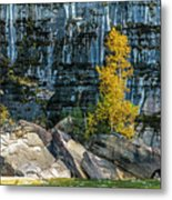 Tree At Picture Rock Cruise Metal Print