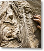 Tree Bark And Hand Metal Print