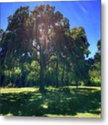 Tree Bathed In Sun Metal Print