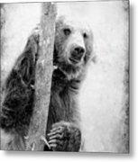 Tree Bear Metal Print