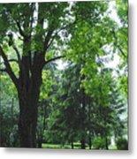 Tree Bench Metal Print