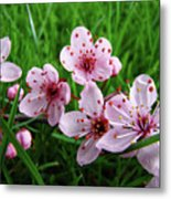 Tree Blossoms 4 Spring Flowers Art Prints Giclee Flower Blossoms Metal Print