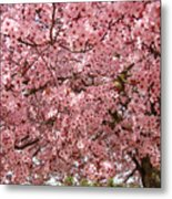 Tree Blossoms Pink Blossoms Art Prints Giclee Flower Landscape Artwork Metal Print