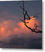 Tree Branch At Sunset Metal Print