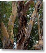 Tree Branch Texture 1 Metal Print