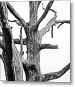 Tree Branches Metal Print