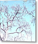 Tree Branches Reaching For Heaven 2 Metal Print