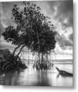 Tree By The Lake Metal Print