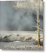 Tree By The Thermal - Yellowstone Metal Print