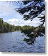 Tree By The Water Metal Print