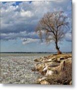 Tree By Water Metal Print