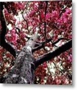 Tree Canopy Red Metal Print