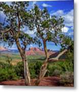 Tree Captures Sedona Metal Print