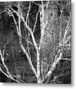 Tree Castle Metal Print