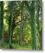 Tree Cathedral 2 Metal Print