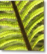 Tree Fern Frond Metal Print