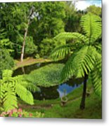 Tree Ferns Metal Print by Gaspar Avila
